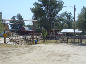 Victory Ranch Stables